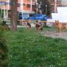 Psi lutalice na dječijem igralištu: Čekaju li nadležni napad na građane kako bi konačno riješili ovaj problem?